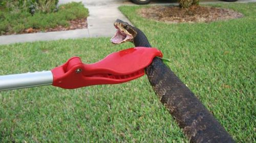 water mocassin snake